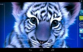 Blue Tiger Live Wallpaper