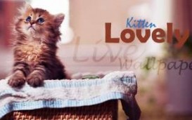 Lovely Kitten Live Wallpaper